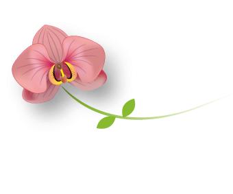 Orchidée Reflets-de-Bijoux